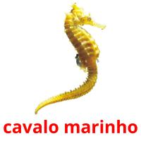 cavalo marinho card for translate