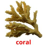 coral picture flashcards