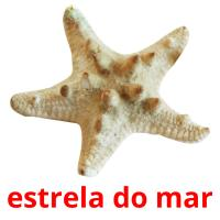 estrela do mar picture flashcards