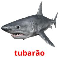 tubarão picture flashcards