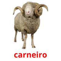 carneiro picture flashcards