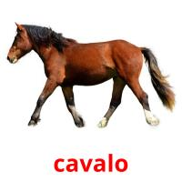 cavalo picture flashcards