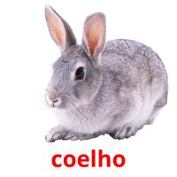 coelho picture flashcards