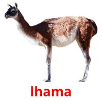 lhama picture flashcards