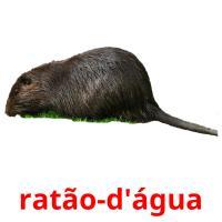 ratão-d'água picture flashcards