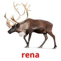 rena picture flashcards