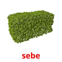 sebe picture flashcards