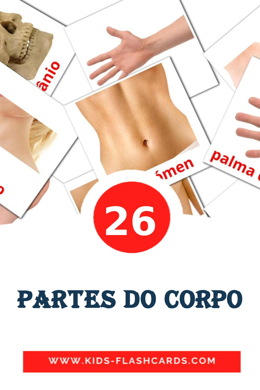 26 Partes do Corpo Picture Cards for Kindergarden in portuguese
