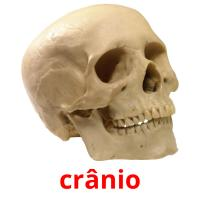 crânio picture flashcards