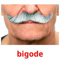bigode card for translate