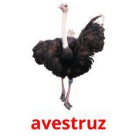 avestruz picture flashcards
