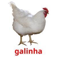 galinha picture flashcards