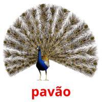 pavão picture flashcards