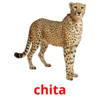 chita picture flashcards