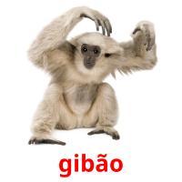 gibão picture flashcards