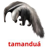 tamanduá picture flashcards