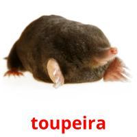 toupeira picture flashcards