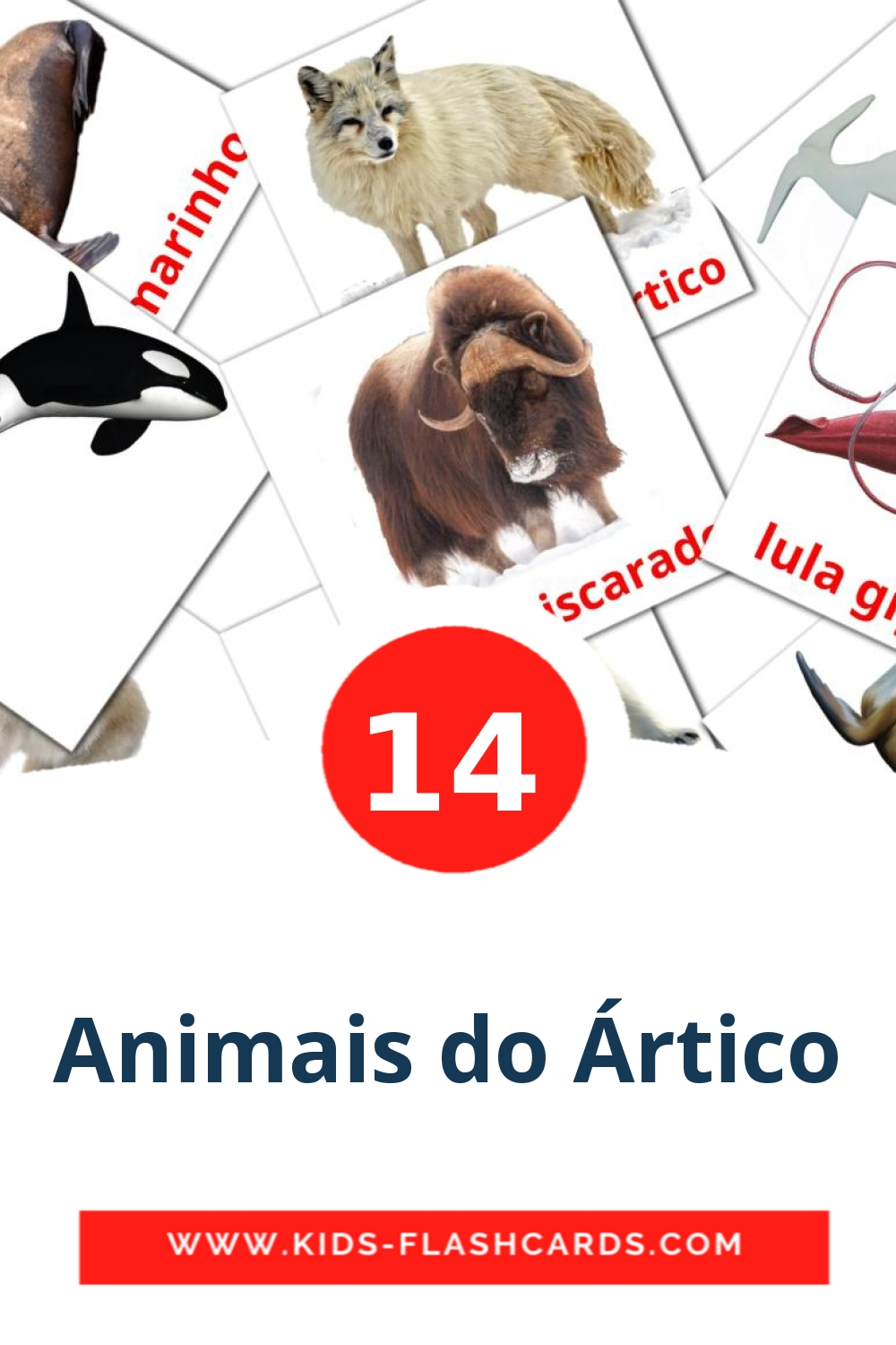 14 Animais do Ártico Picture Cards for Kindergarden in portuguese