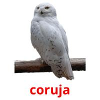 coruja picture flashcards