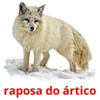 raposa do ártico picture flashcards