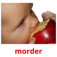 morder picture flashcards