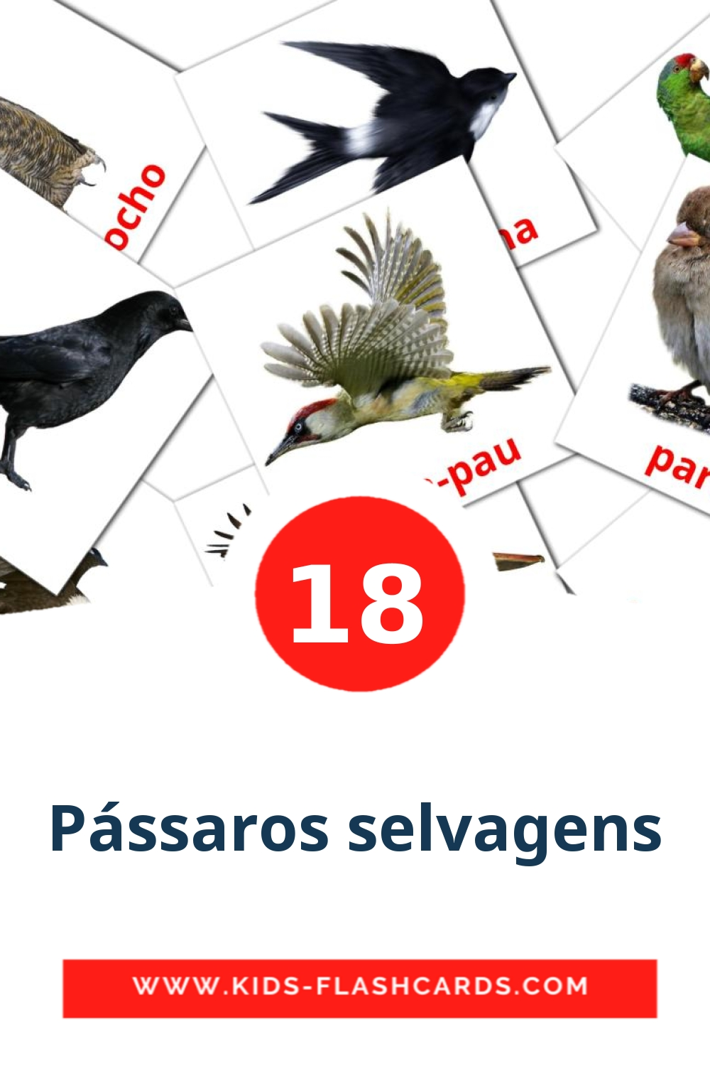 18 Pássaros selvagens Picture Cards for Kindergarden in portuguese