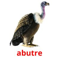 abutre picture flashcards