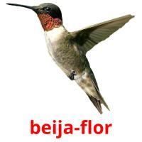 beija-flor picture flashcards