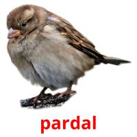 pardal picture flashcards
