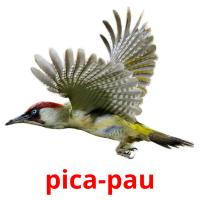pica-pau picture flashcards
