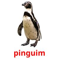 pinguim card for translate