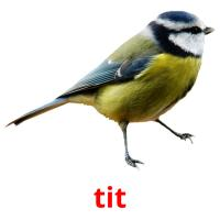 tit picture flashcards