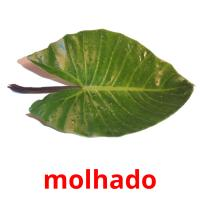 molhado picture flashcards