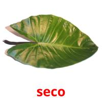 seco picture flashcards