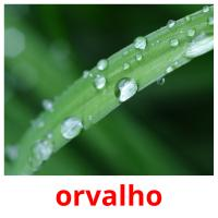 orvalho picture flashcards
