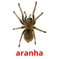 aranha picture flashcards