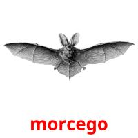 morcego picture flashcards