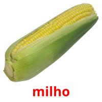milho picture flashcards