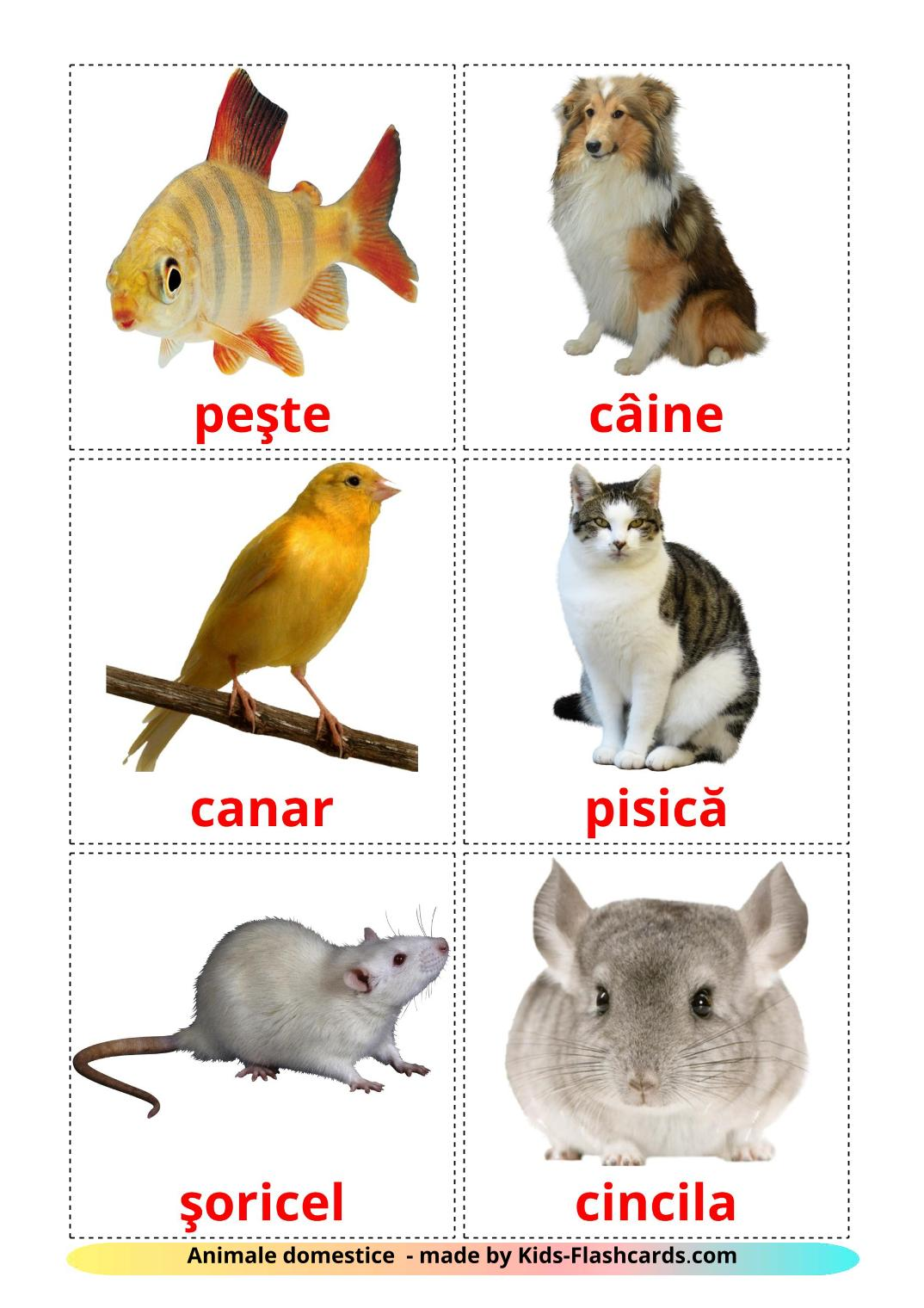 Domestic animals - 10 Free Printable romanian Flashcards