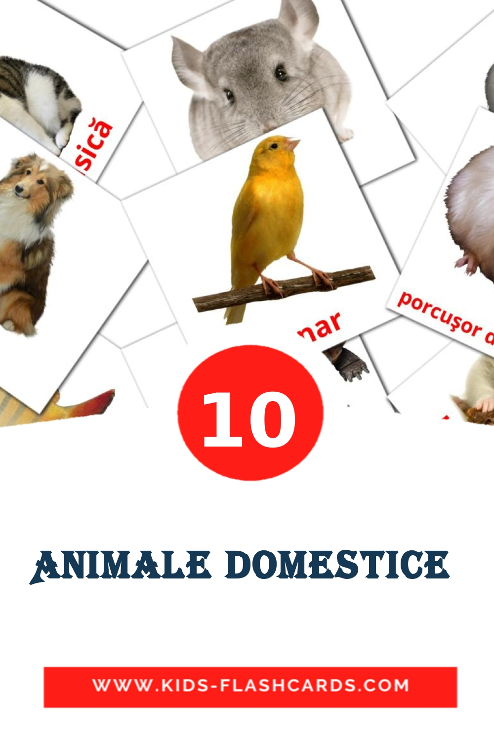 10 Animale domestice  Picture Cards for Kindergarden in romanian
