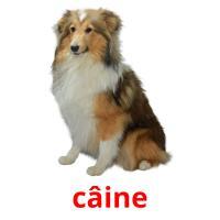 câine picture flashcards
