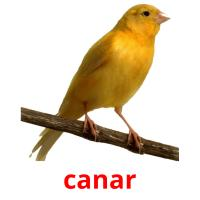 canar picture flashcards