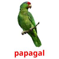 papagal picture flashcards