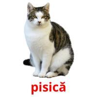 pisică picture flashcards