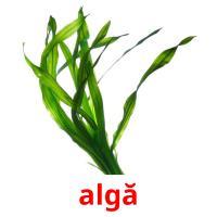 algă picture flashcards