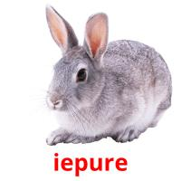iepure picture flashcards
