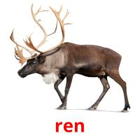 ren picture flashcards