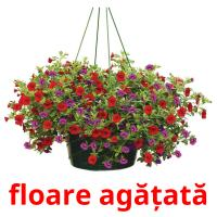 floare agățată picture flashcards