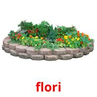 flori picture flashcards