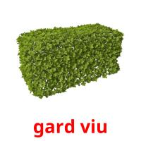 gard viu picture flashcards